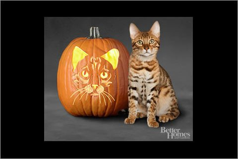 Bengals Pumpkin Carving Stencils 31 Free Pumpkin Carving Stencils Of Cats for A Purrfect