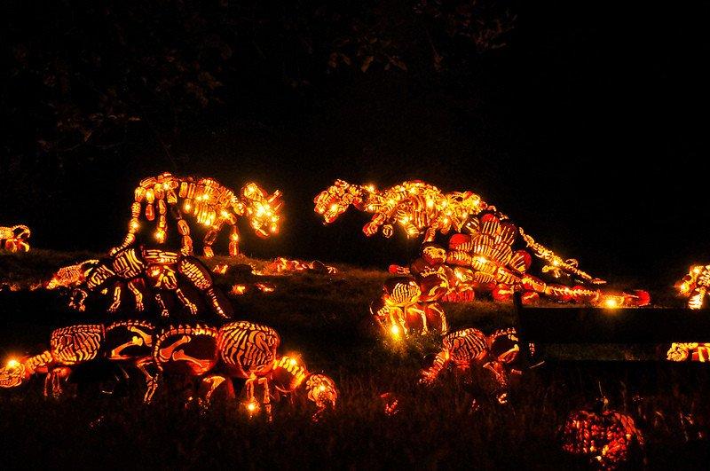 Blaze Pumpkin Carving Amazing Pumpkin Arrangements at the Great Jack O'lantern