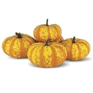 Blaze Pumpkin Carving Pumpkins Ve Ables