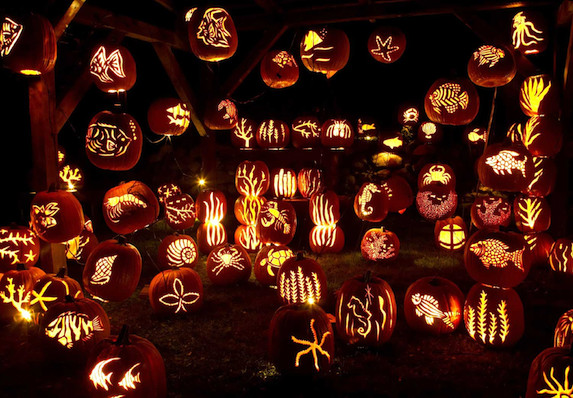 Blaze Pumpkin Carving the Great Jack O' Lantern Blaze Halloween