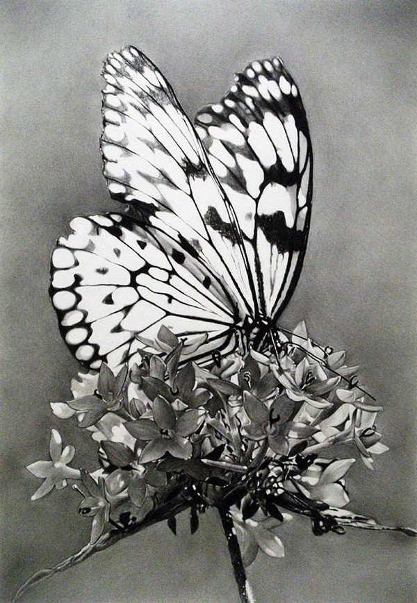 Butterfly Drawings In Pencil 10 Beautiful butterfly Drawings for Inspiration Hative