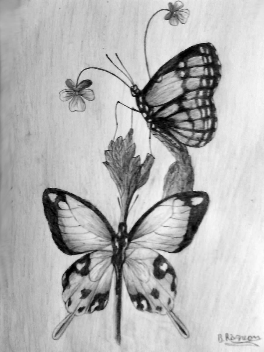 Butterfly Drawings In Pencil 18 butterfly Drawings Art Ideas