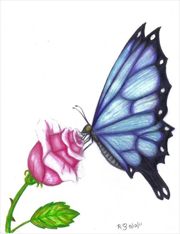 Butterfly Drawings In Pencil 9 butterfly Drawings Art Ideas