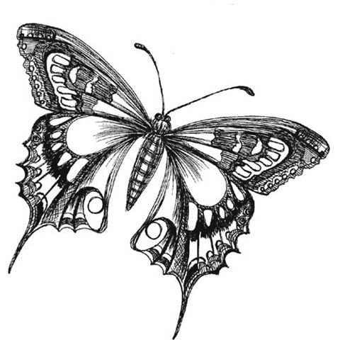 Butterfly Drawings In Pencil butterfly Drawings Black and White