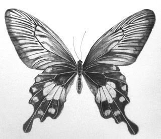 Butterfly Drawings In Pencil butterfly Drawings In Pencil Step by Step butterfly