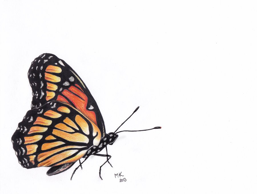 Butterfly Drawings In Pencil Colored Pencil butterfly by Art Nightsky On Deviantart