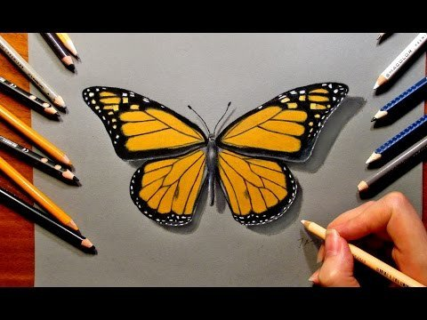 Butterfly Drawings In Pencil Drawing A butterfly with Colored Pencils Speed Draw