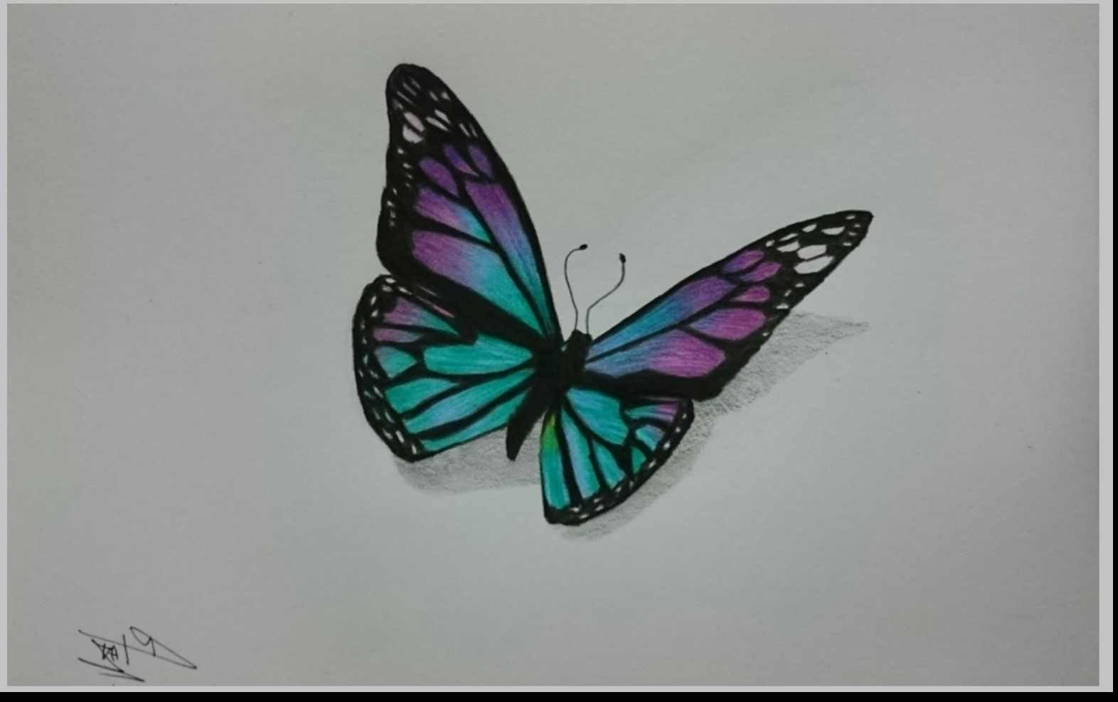 Butterfly Drawings In Pencil Drawn butterfly Colour Pencil Pencil and In Color Drawn