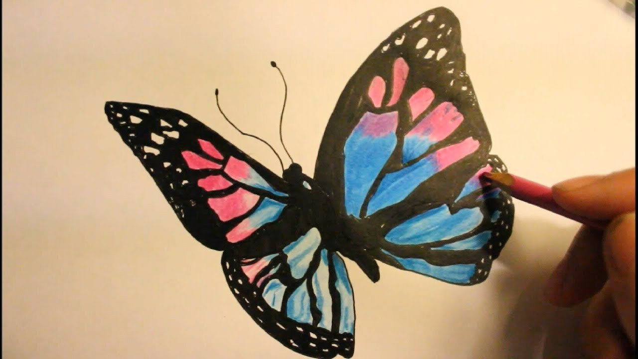 Butterfly Drawings In Pencil How to Draw A butterfly Easy Step by Step Wings with