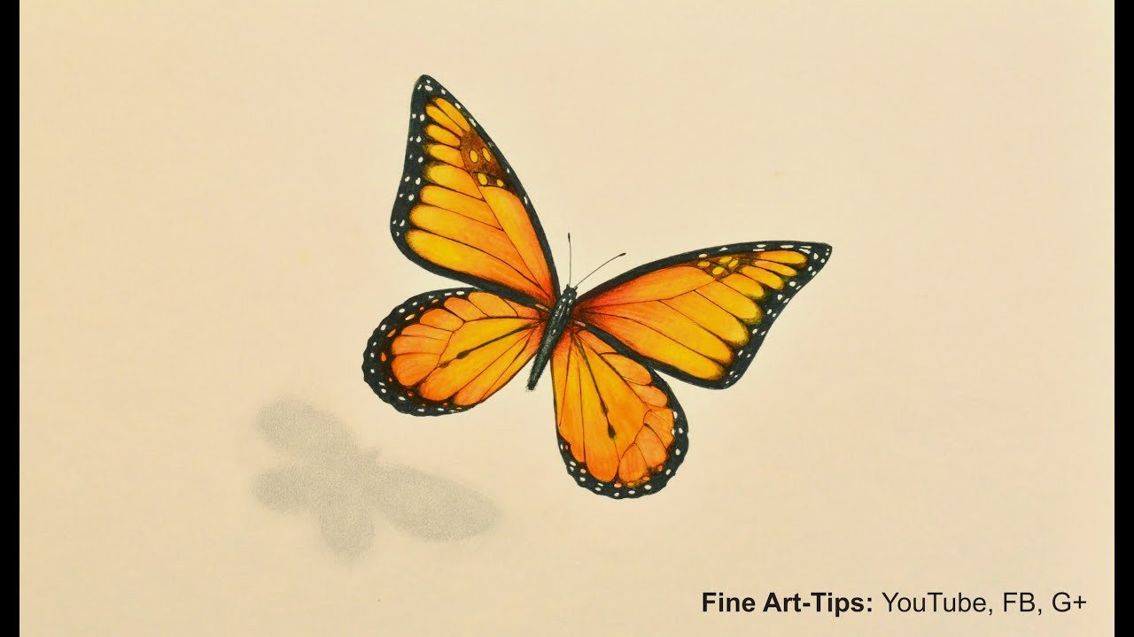 Butterfly Drawings In Pencil How to Draw A Monarch butterfly with Markers and Color