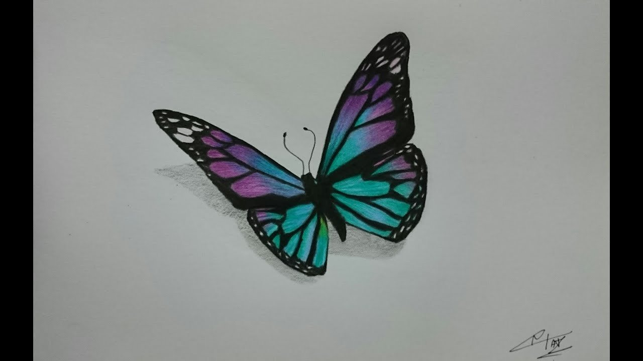 Butterfly Drawings In Pencil How to Draw A Realistic butterfly with Colored Pencils