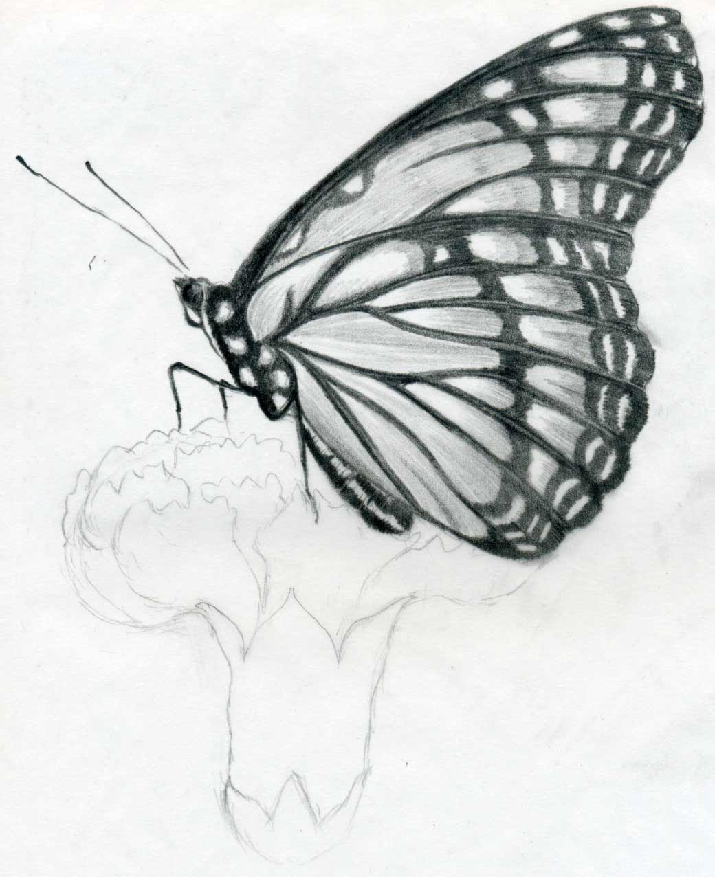Butterfly Drawings In Pencil Rare Collection Of Free Wallpapers 10 1 10 11 1 10