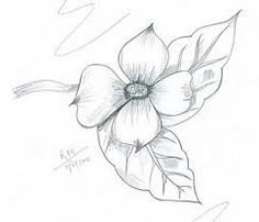 Dogwood Flower Outline 1000 Images About Texas Flowers On Pinterest
