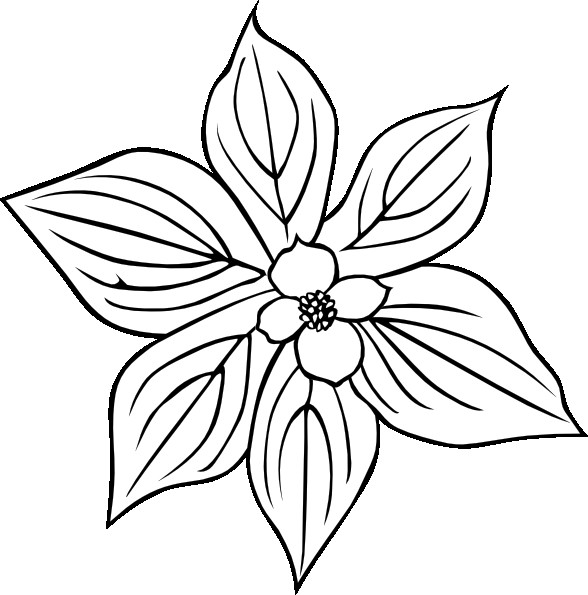Dogwood Flower Outline Creeping Dogwood Coloring Page Clip Art at Clker