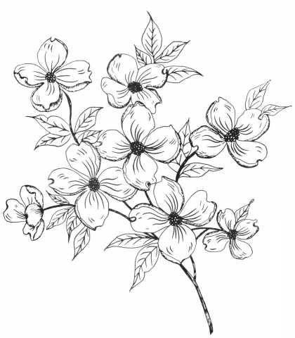 Dogwood Flower Outline Dogwood Blossom Drawing at Getdrawings