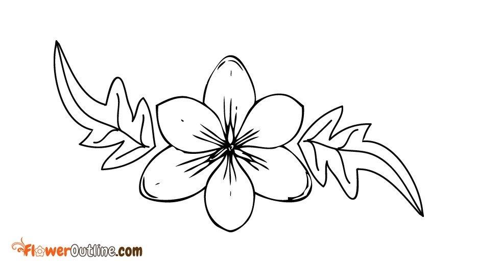 Dogwood Flower Outline Dogwood Flower Outline