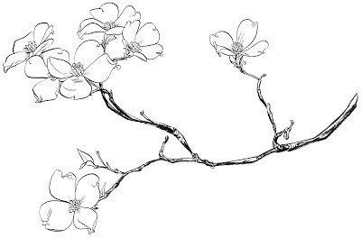 Dogwood Flower Outline Dogwood Tattoo Crave Pinterest