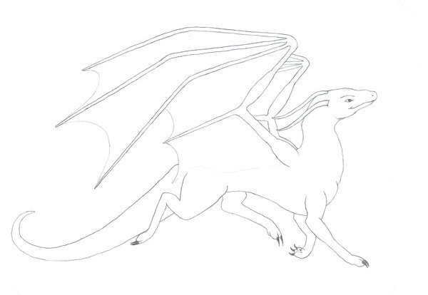 Dragon Tracing Pictures Dragon Tracing by Nezdragon On Deviantart
