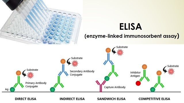 Elisa Plate Template Immunology Archives Bioscience Notes