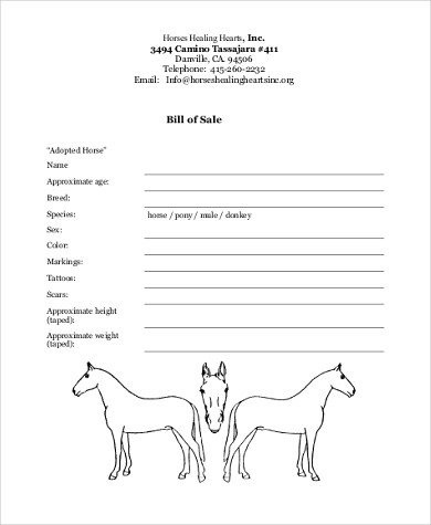 Equine Bill Of Sales Horse Bill Of Sale Samples 8 Free Documents In Word Pdf