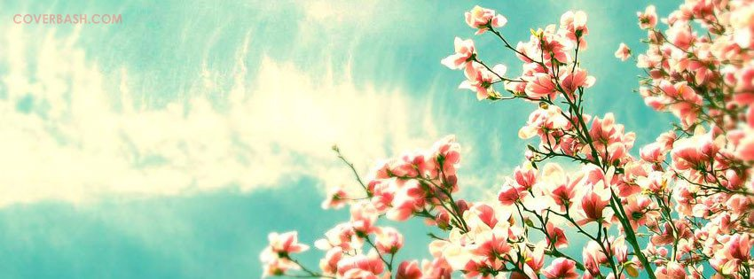 Facebook Cover Photos Flowers Beautiful Caeli Flowers Cover Picture