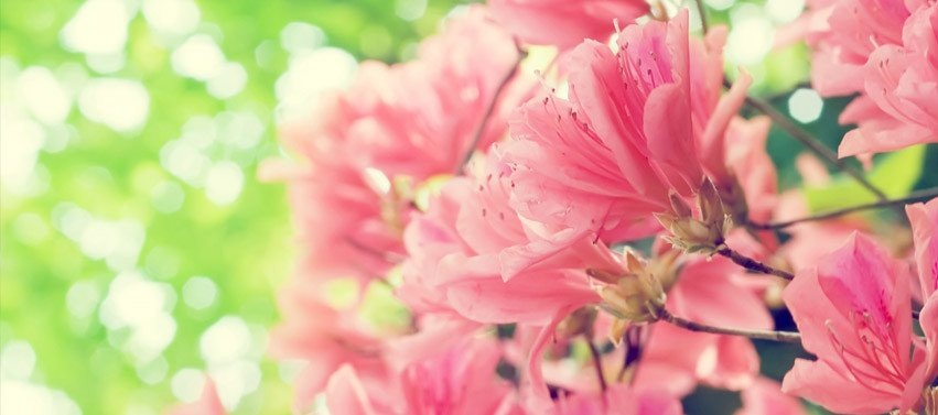 Facebook Cover Photos Flowers Beautiful Spring Flowers Fast Line Image Editor