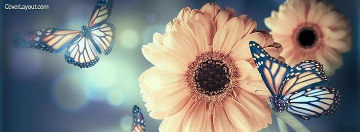 Facebook Cover Photos Flowers Best 25 Cover Photos Ideas On Pinterest