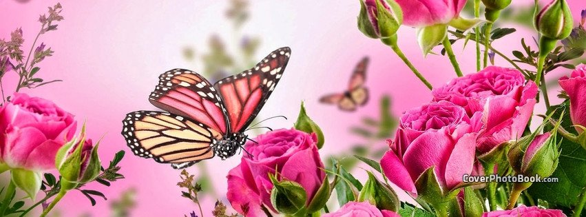 Facebook Cover Photos Flowers butterfly Pink Flowers Spring Cover Animals