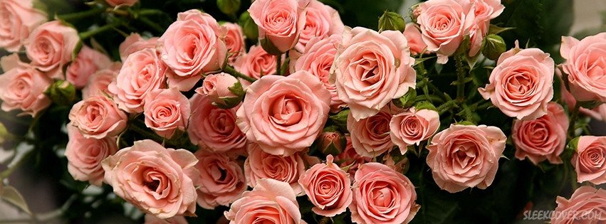 Facebook Cover Photos Flowers Evangeline Gossamer Slytherin
