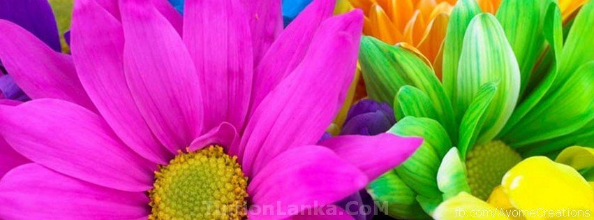 Facebook Cover Photos Flowers High Quality Facebook Covers Flower Fb Covers Photos