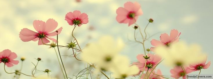 Facebook Cover Photos Flowers Light Pink Flowers Cover