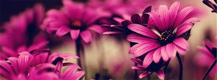 Facebook Cover Photos Flowers Pink Nature Banner Cover Profile Banner