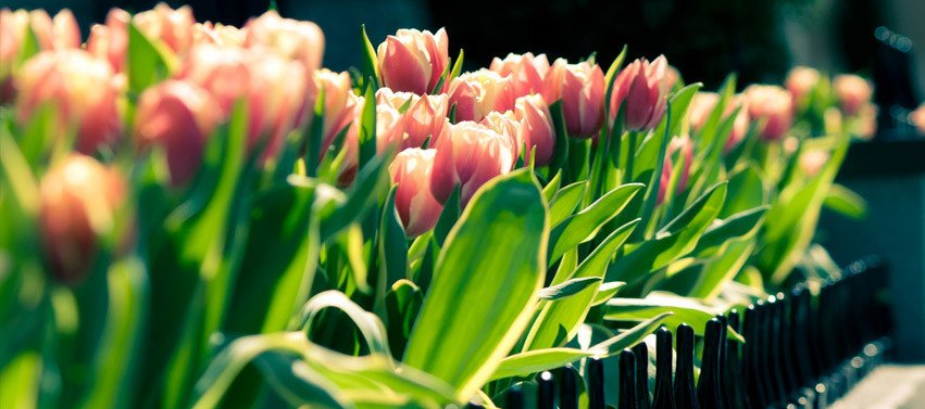 Facebook Cover Photos Flowers Spring Flowers Fast Line Image Editor