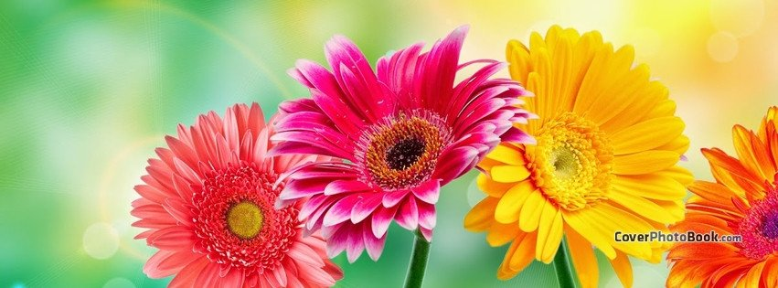 Facebook Cover Photos Flowers Spring Flowers Light Bokeh Cover Nature