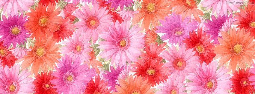 Facebook Cover Photos Flowers Web Design Pany In Udaipur Flowers Timeline