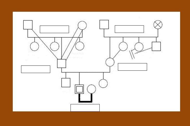 Family Genogram Template Word 30 Free Genogram Templates & Symbols Template Lab