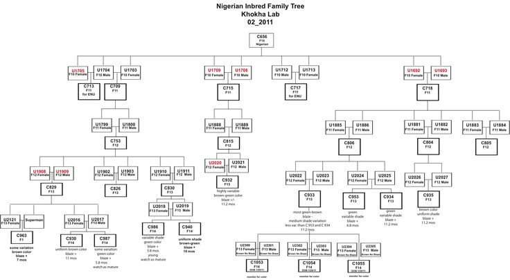 Family Tree Template Google Docs Genetic Family Tree Template Google Search