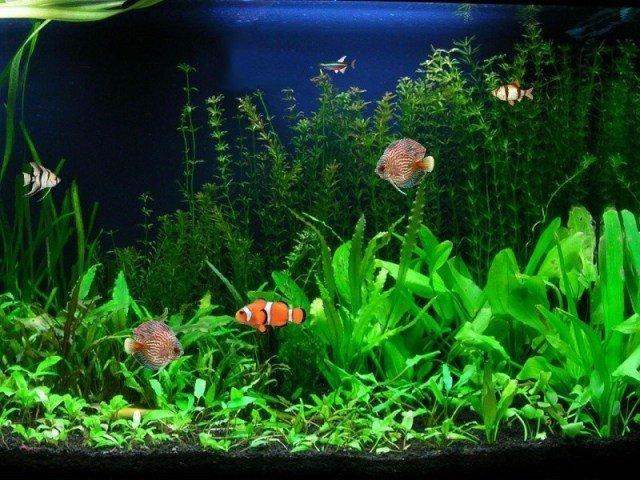 Fish Tank Background Printable Aquarium Backgrounds to Print Free Printable Background