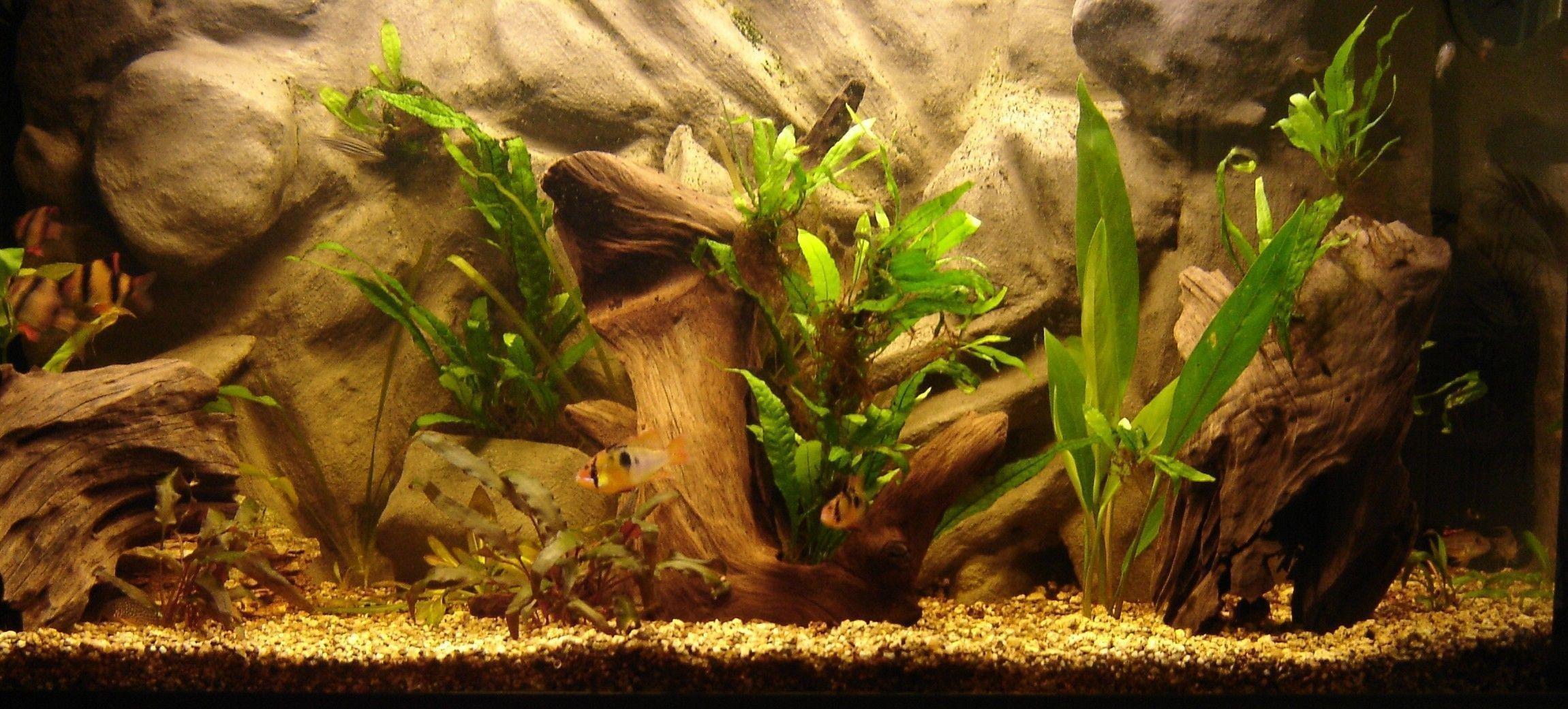 Fish Tank Background Printable Aquarium Backgrounds Wallpaper Cave