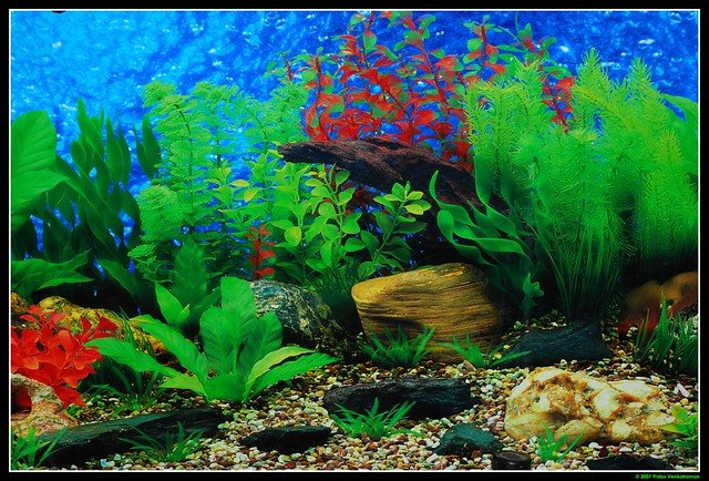 Fish Tank Background Printable Fish Tank Backgrounds Printable