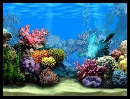 Fish Tank Background Printable Image Result for Fishtank Background Printable Cartoon