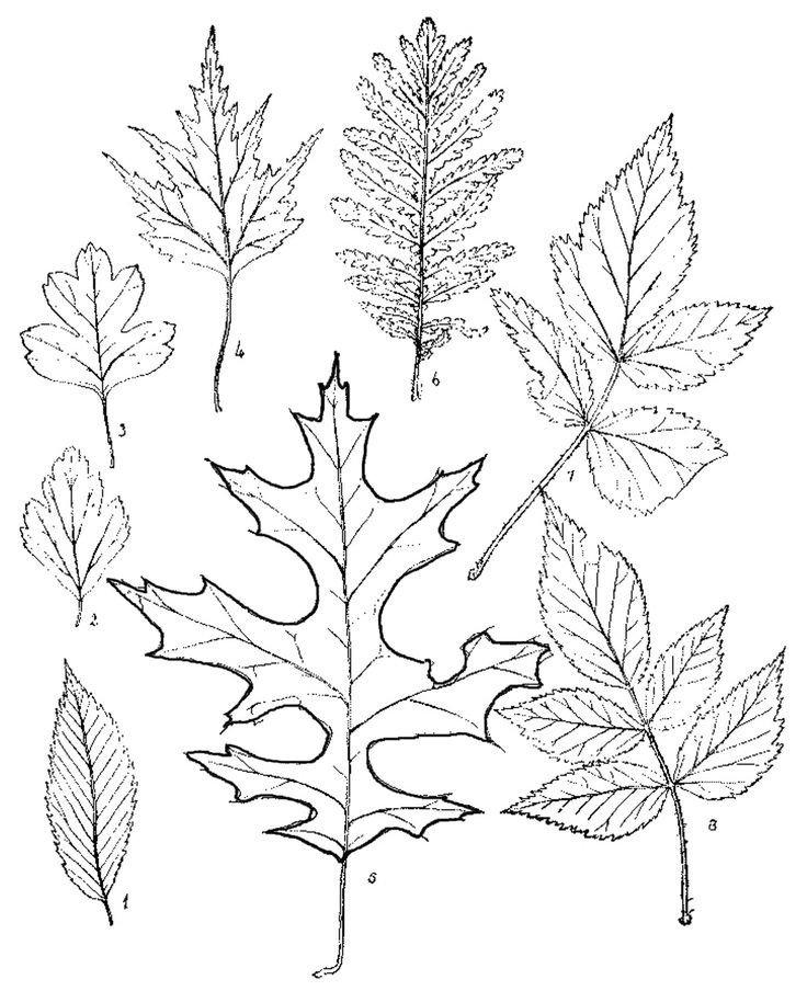Free Woodburning Patterns Stencils 25 Best Ideas About Wood Burning Stencils On Pinterest
