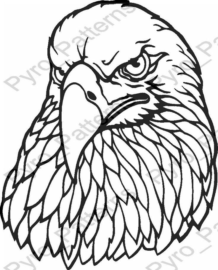 Free Woodburning Patterns Stencils Eagle Head Bird Pyrography Wood Burning Pattern Printable