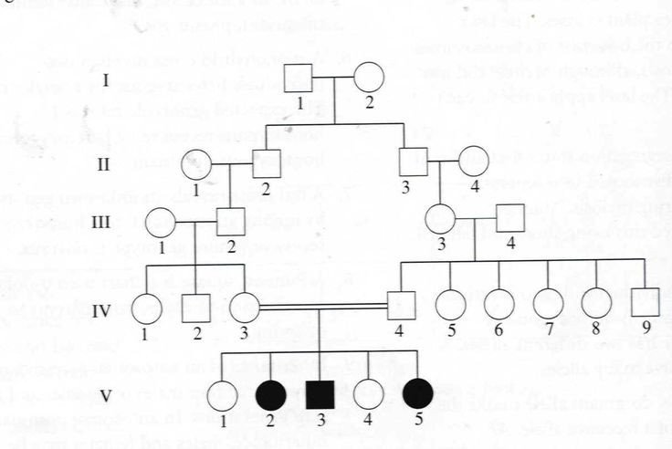Google Family Tree Template Genetic Family Tree Template Google Search