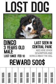 Lost Dog Flyer Template 1 180 Customizable Design Templates for Lost Animal