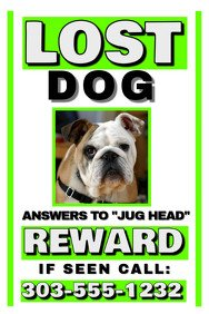 Lost Dog Flyer Template Customize 510 Pets Flyer Templates
