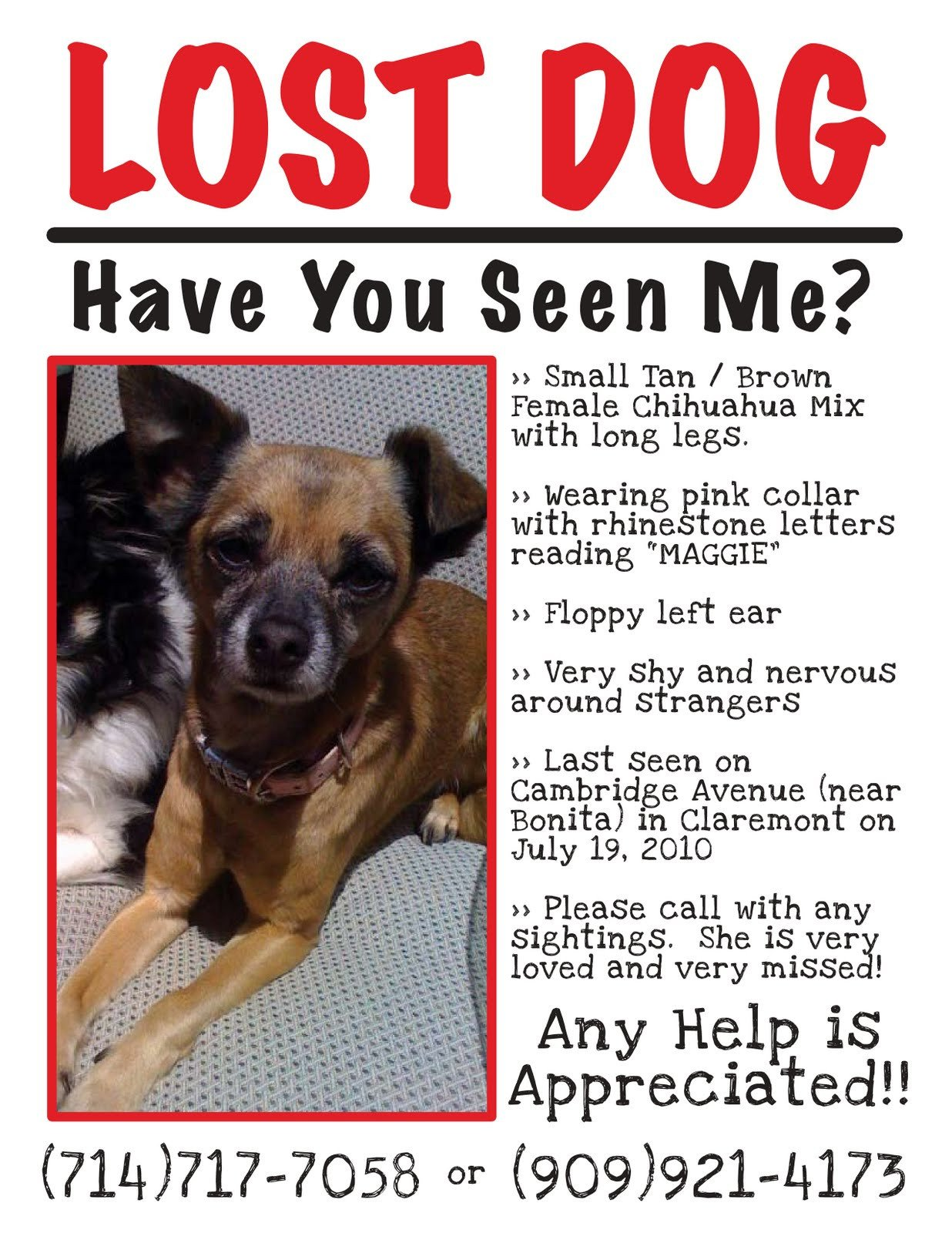 Missing Dog Flyer Template Claremont Insider Lost Dog