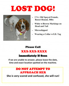 Missing Dog Flyer Template Flyers