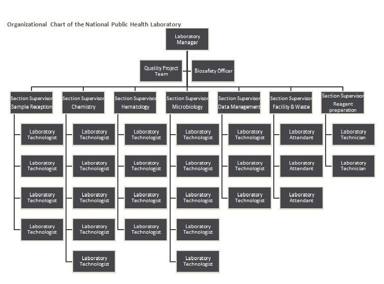 Ms Word org Chart Templates 40 Free organizational Chart Templates Word Excel