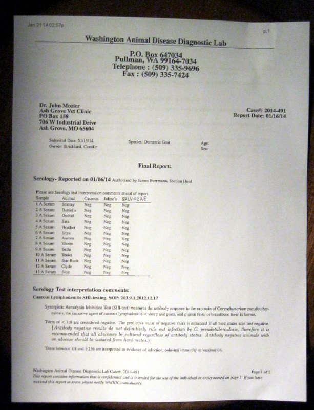 Negative Std Test Results form Windsong Nubian Dairy Goats Home